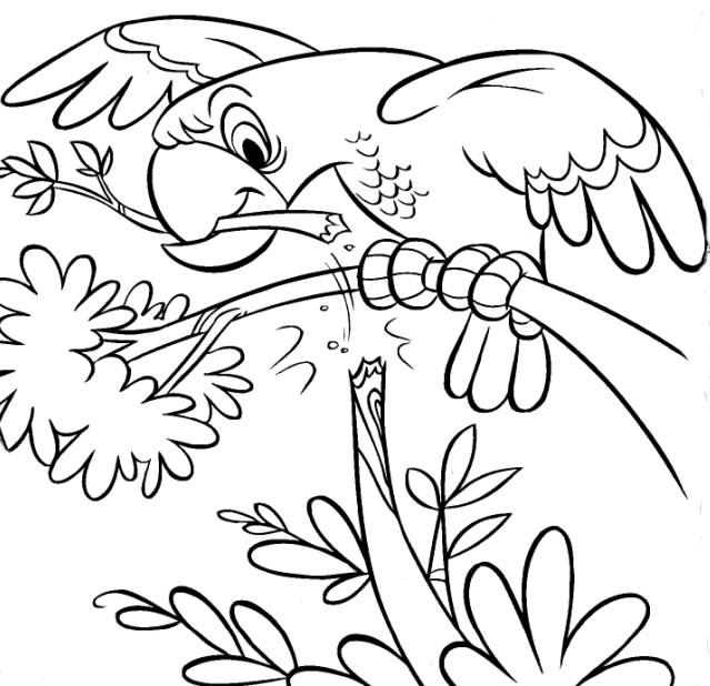 Desenho De Papagaio Para Colorir Desenhos Infantil De Animais