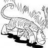 desenho-de-tigre-de-bengala-para-colorir-desenho-de-animais-selvagens-para-pintar