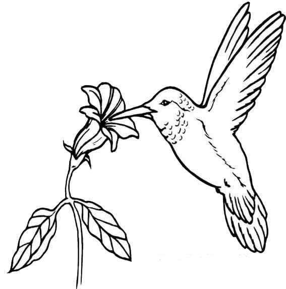 Desenhos Para Imprimir, Colorir E Pintar De Animais