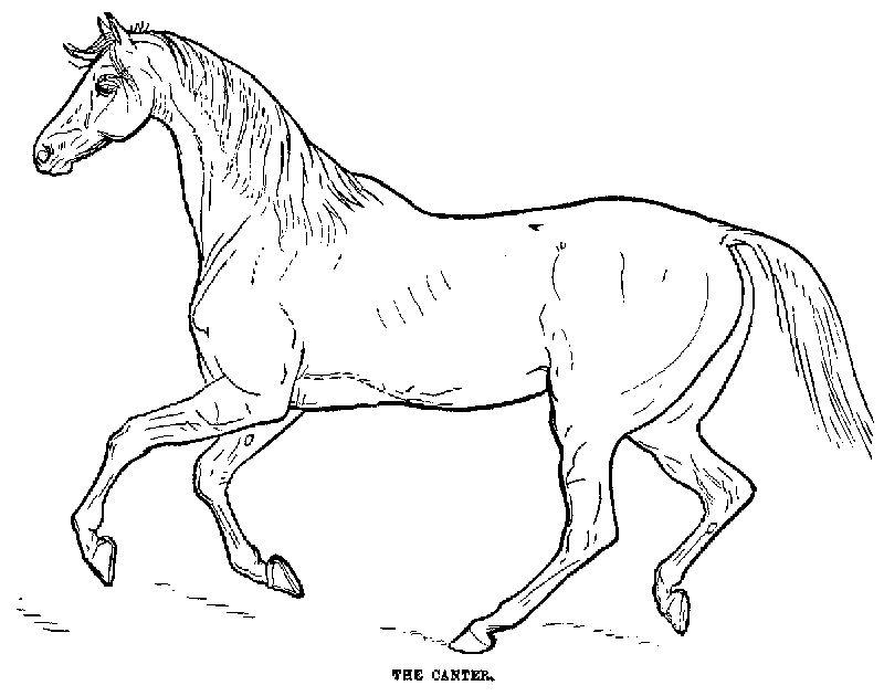 Confira Diversos Desenhos Para Imprimir E Colorir De Animais
