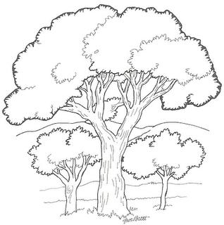 Desenhos De árvores 21 De Setembro Dia Da árvore