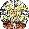 atividades corpo humano cérebro
