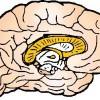 atividades corpo humano cérebro 02