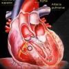 atividades corpo humano coração 03
