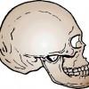 atividades corpo humano crânio 03