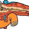 atividades corpo humano pâncreas