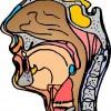 atividades corpo humano perfil