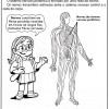 atividades corpo humano sistema nervoso periférico