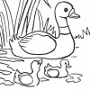 desenhos_colorir_aves_pato