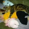 Crianças e animais 07