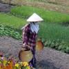 O Vaso Chinês