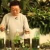 Como fazer hortas orgânicas com garrafas Pet