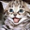 Adestrar personalidade dos gatos é possível