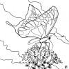 Desenho para colorir borboleta (16)