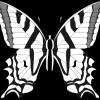 Desenho para colorir borboleta (23)