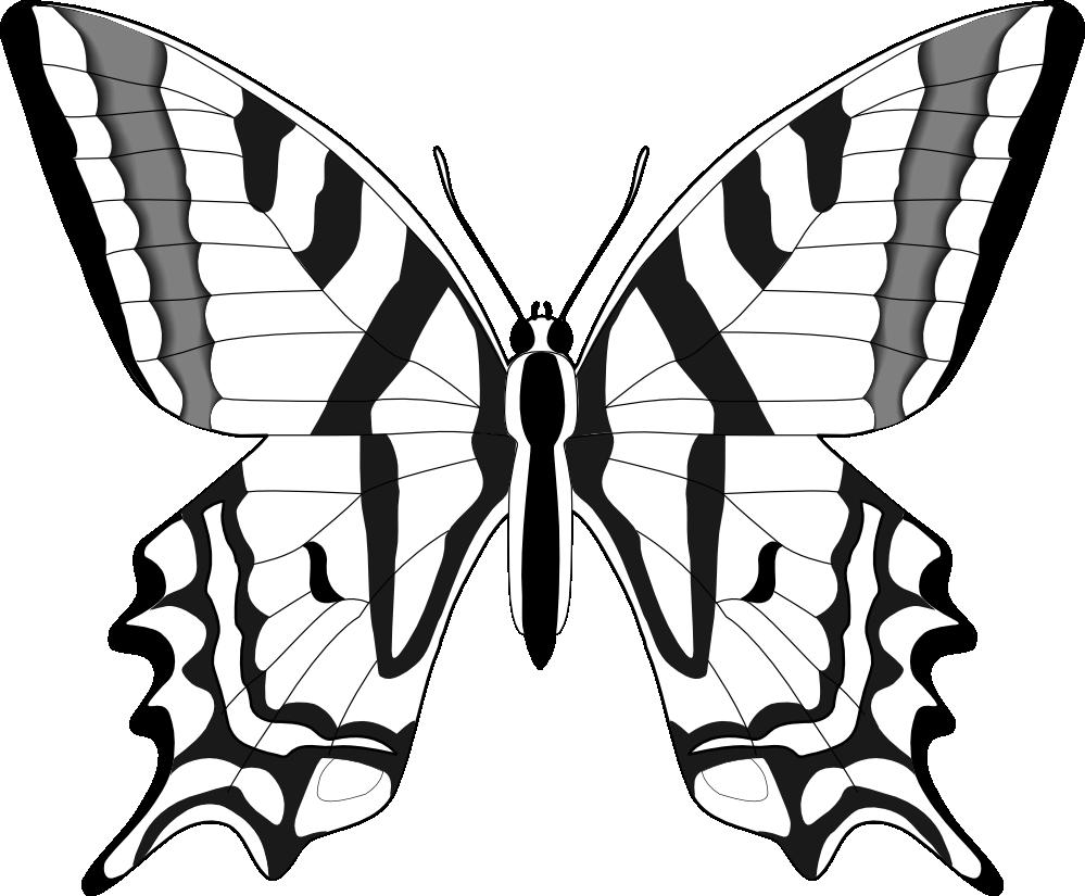 Line Drawing Prints : Desenhos para colorir de borboletas